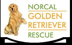 Norcal Golden Retriever Rescue Ngrr