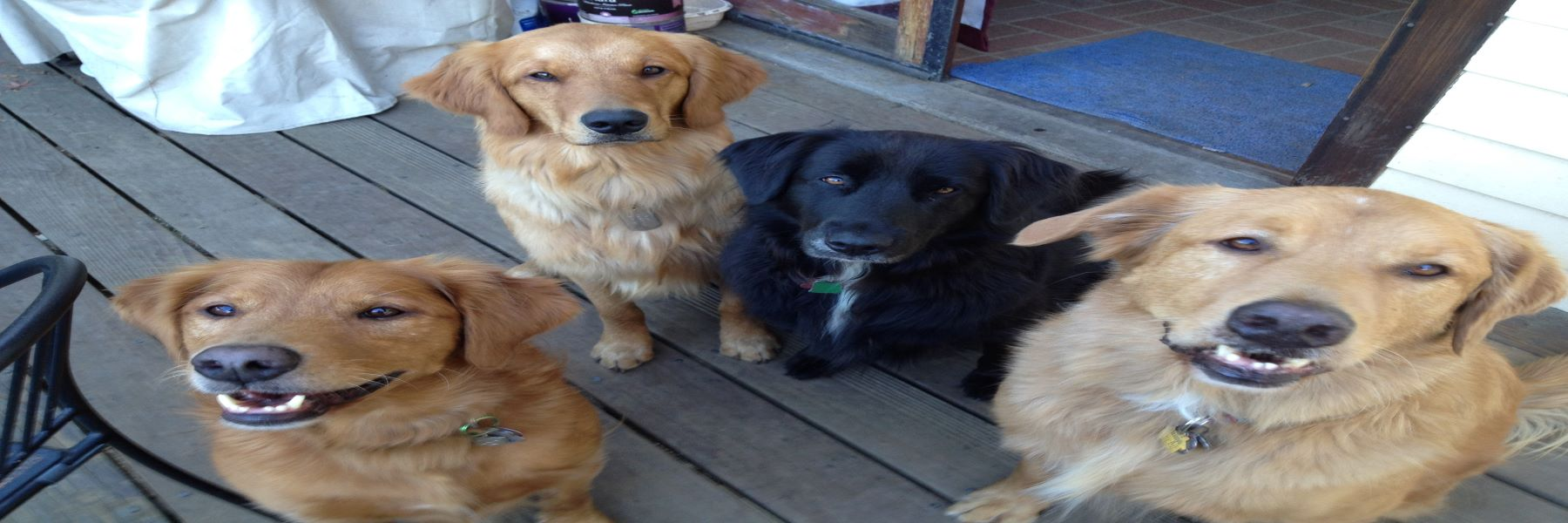 Sometimes all a dog needs <span>is a family and friends..</span>