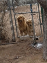 Bella (on right) will be adopted with her pal Dioji.