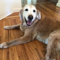 This is Mac now. He's a mellow old guy who would love nothing better than to just hang out with you.