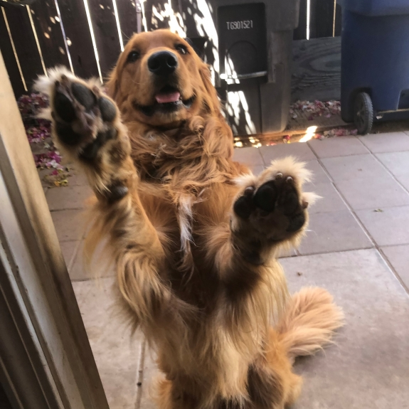 Oh Please let me in the house!